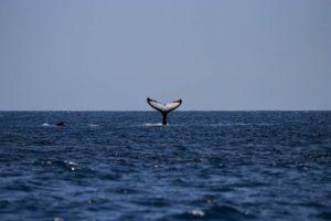 Wachstum- gab nie mehr Bitcoin-Wale