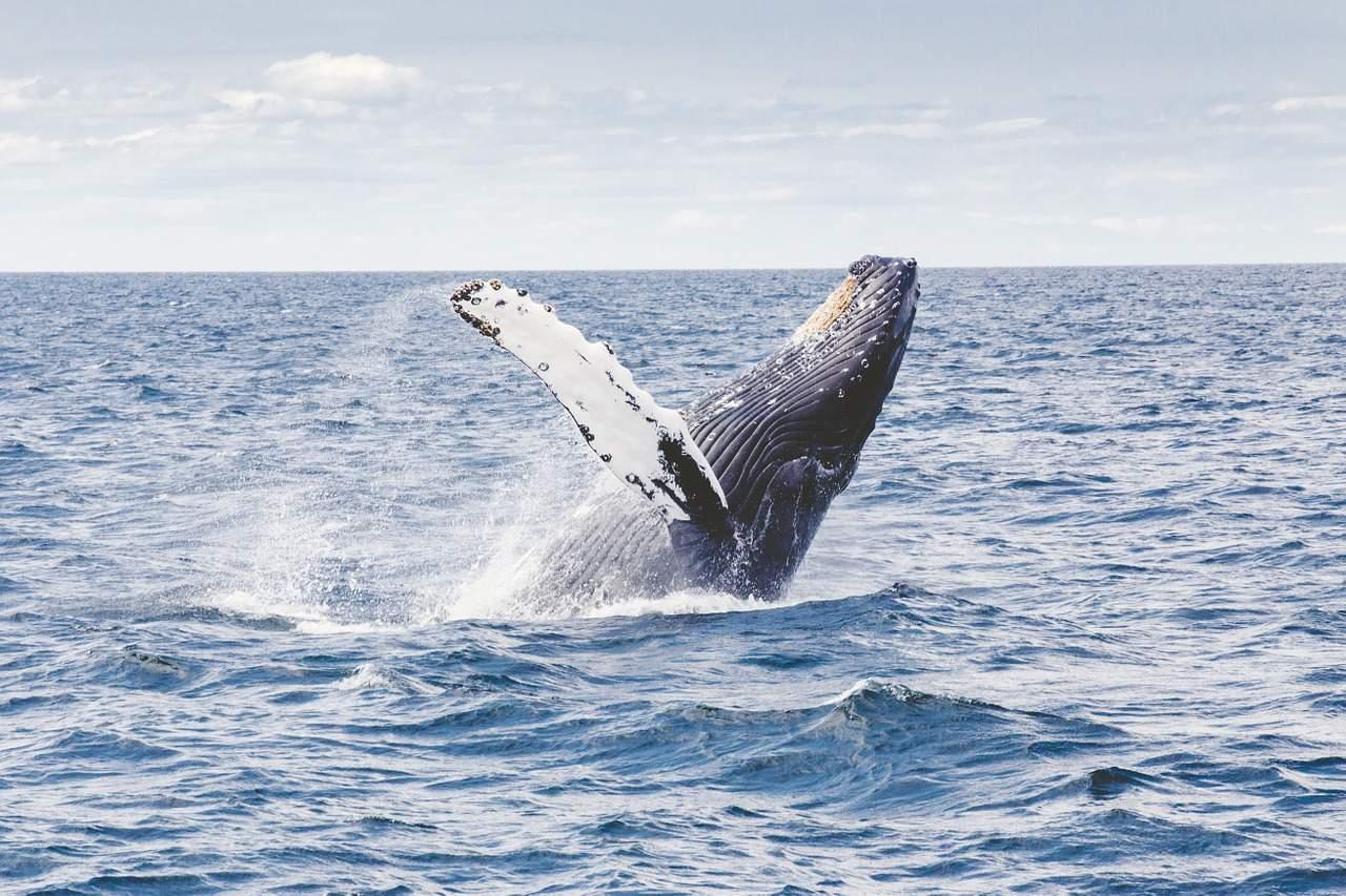 Bitcoin-Preis-Manipulation durch Wale – Fakt