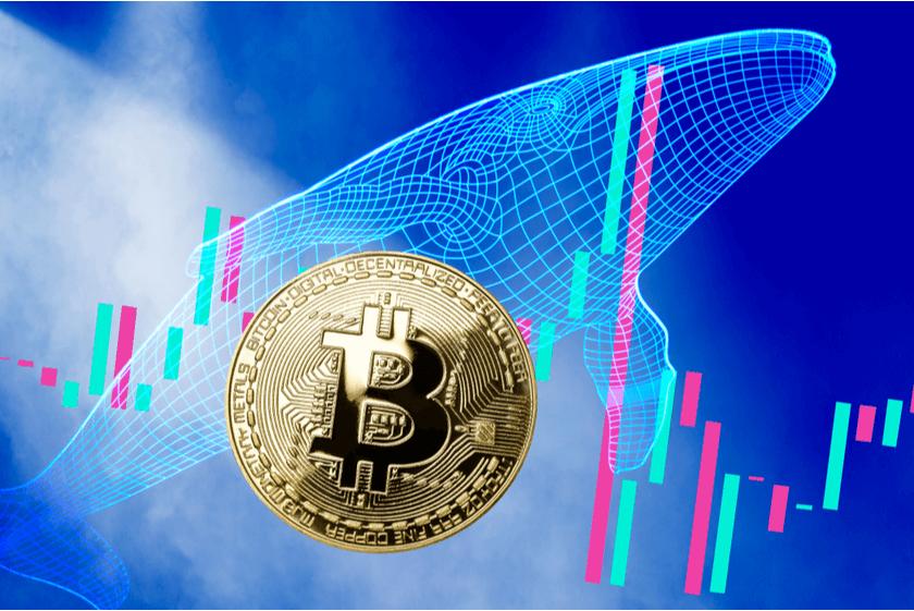 Wal-Alarm 740 Bitcoin von einer ruhenden Adresse nach 9 Jahren transferiert - coin-update