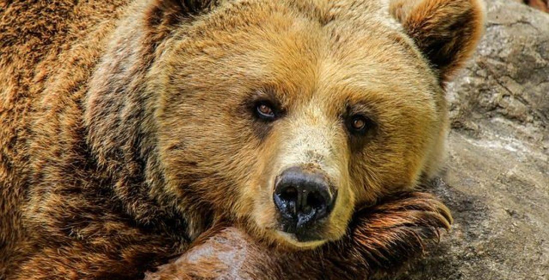 Ist Bitcoin noch im Bärenmarkt, wie Makro-Chart-Muster zeigt?