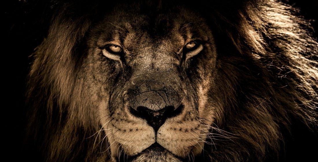 Höhle der Löwen Bitcoin Abzocke - Aufpassen